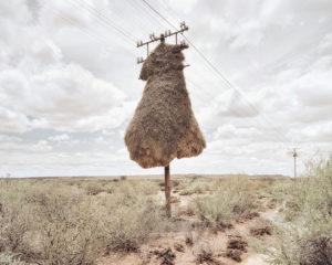 le-nid-suspendu-de-porky-hefer-dillon-marsh-oiseau-tisserin-0