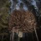 le-nid-doiseaux-the-birds-nest-1