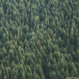 certifications-labels-bois-foret-durablement-deforestation