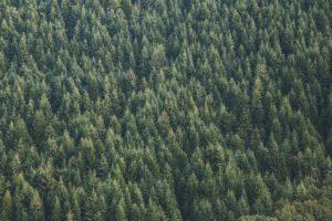 certifications-labels-bois-foret-durablement-deforestation